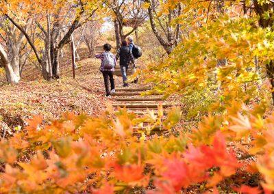 石倉山の紅葉